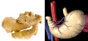ginger-stomach.jpg