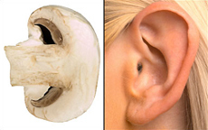 mushroom_ear.jpg