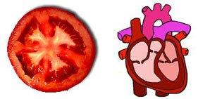 tomato-heart.jpg