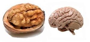 walnut-brain.jpg