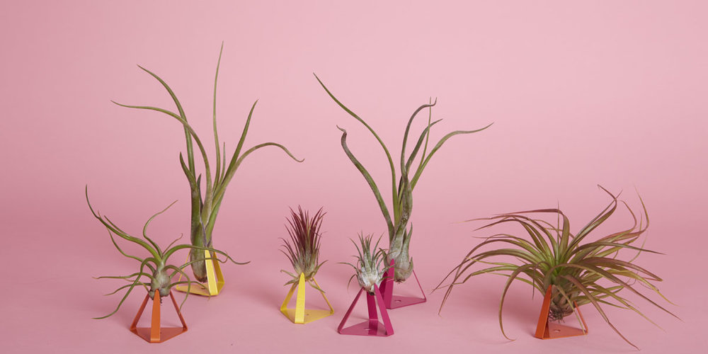 The_Sill_Plants_Nation_Wide_Shipping_airplant_Gift.jpg