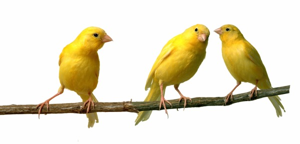 3 birds on a wire