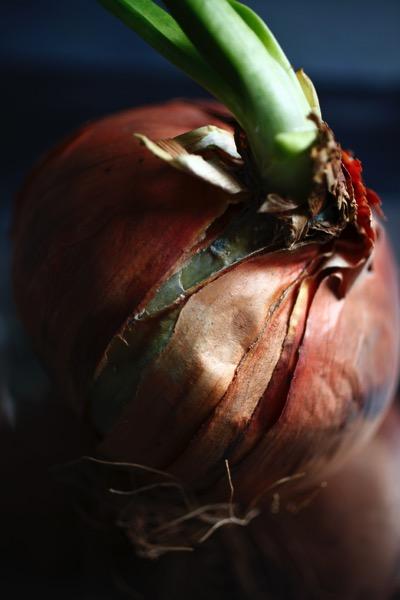 Rotten onion