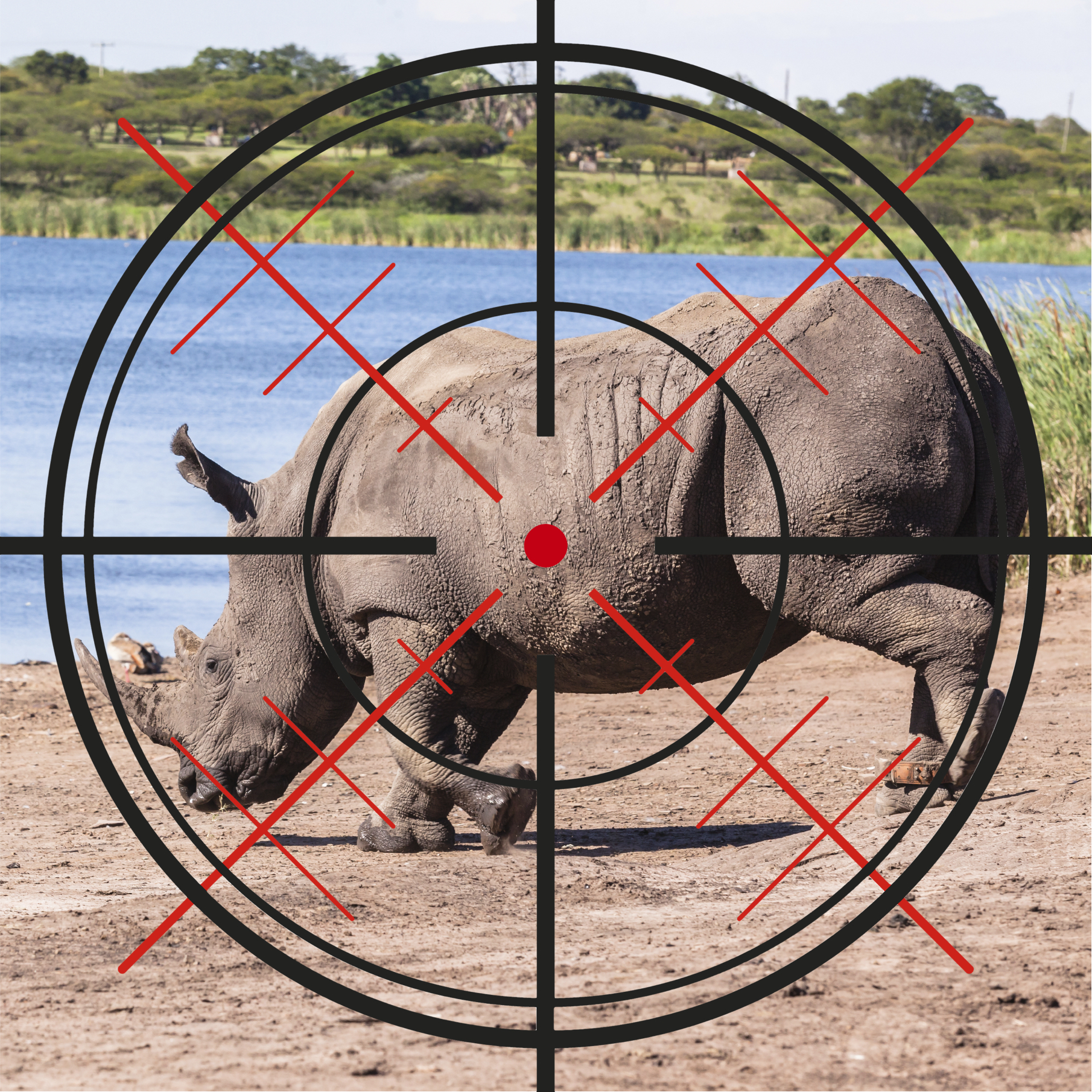 Rhino in the cross hairs at a watering hole