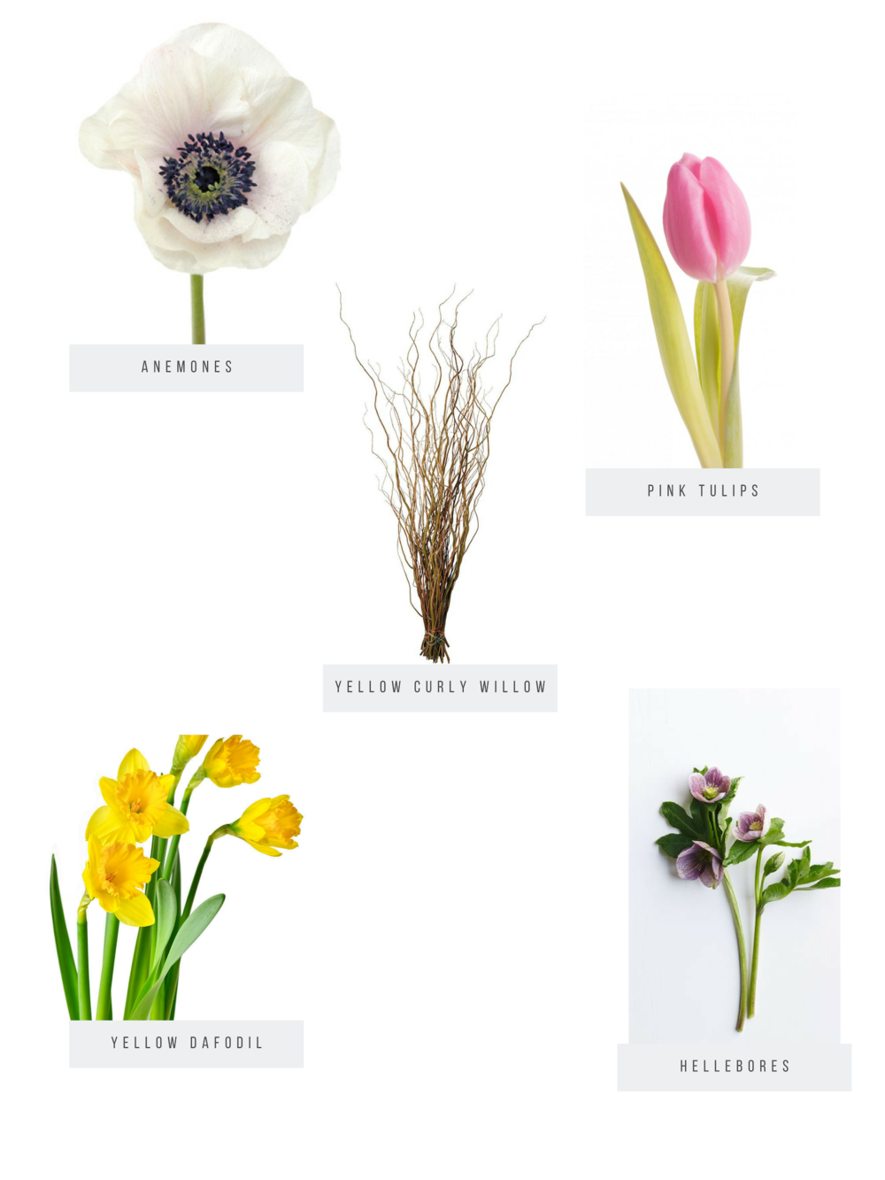 Copy of sALMON tULIPS.png