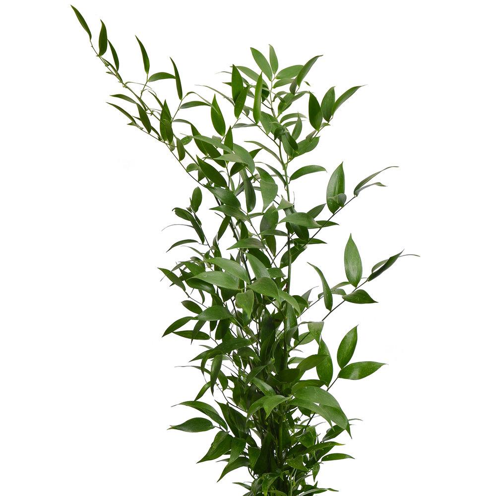 greens-italian-ruscus.jpg
