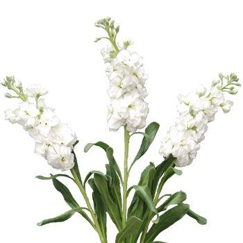 4cb85935397ba96f90abd94f296739da--june-wedding-flowers-anniversary-flowers.jpg