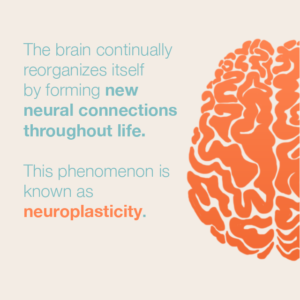 website-neuroplasticity-300x300.png