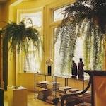 livingroomplants.jpg