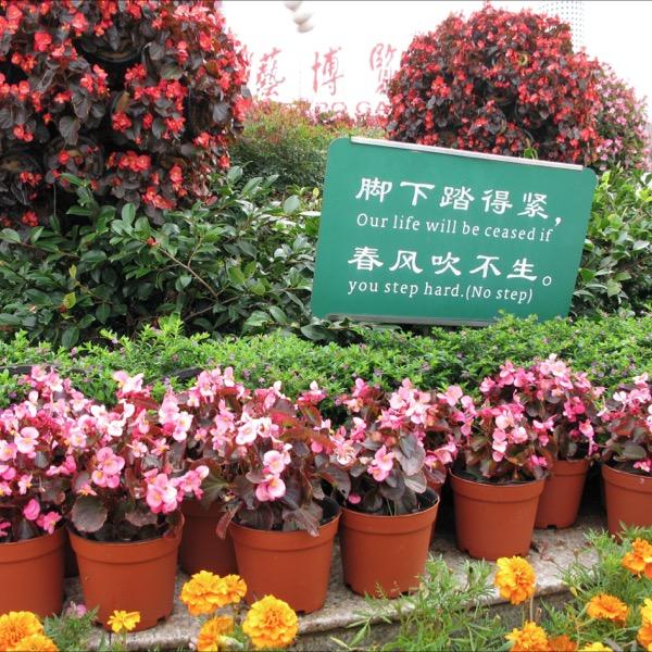 kunming_nostep1.jpg