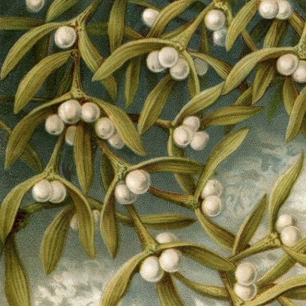 Vintage-Christmas-white berries2.JPG