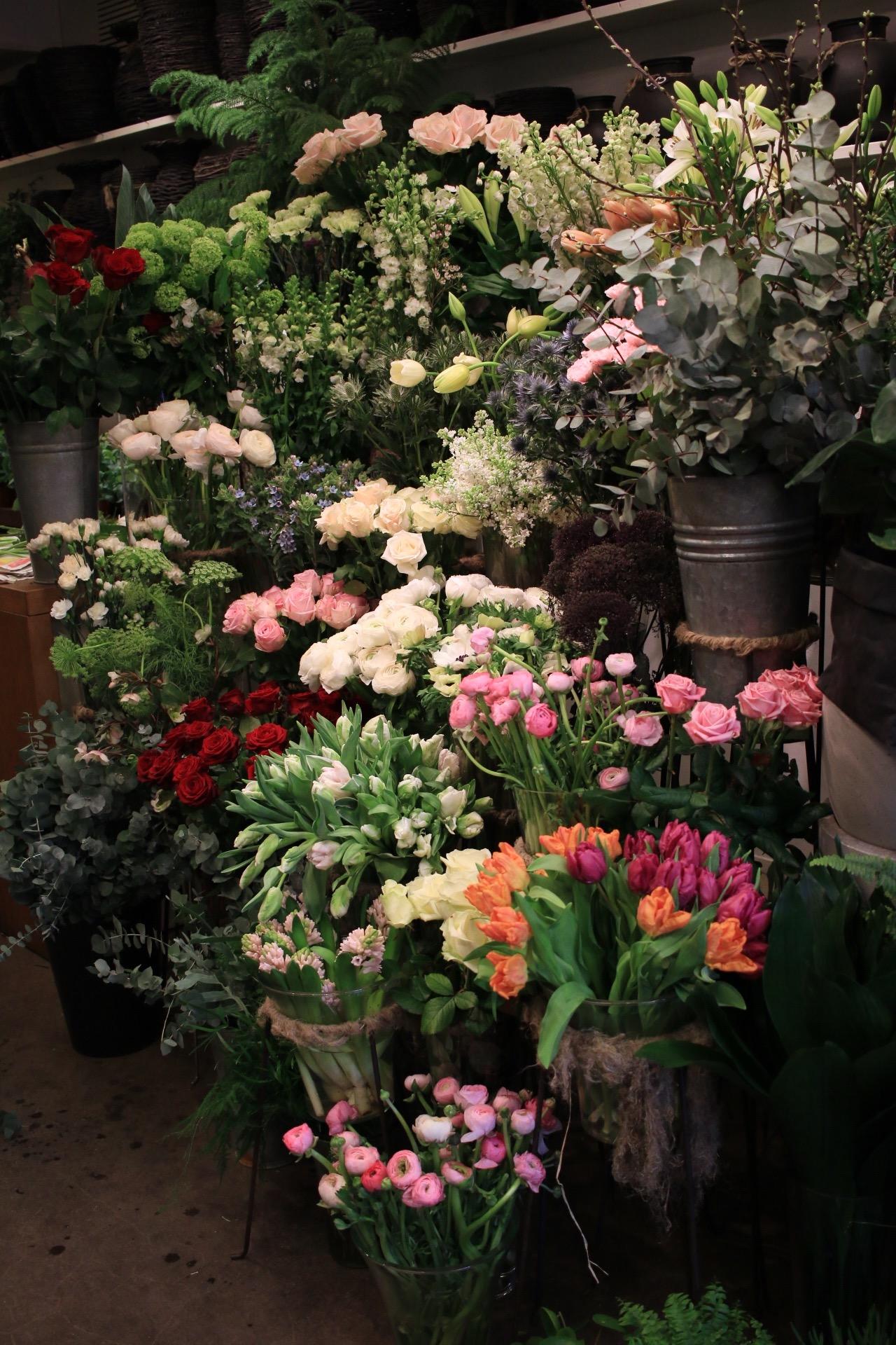 keväisiä leikkokukkia, valkoisia kukkia, tulppaani