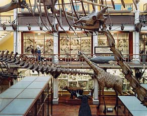 Untitled - Natural History Museum #1 2001 C-print
