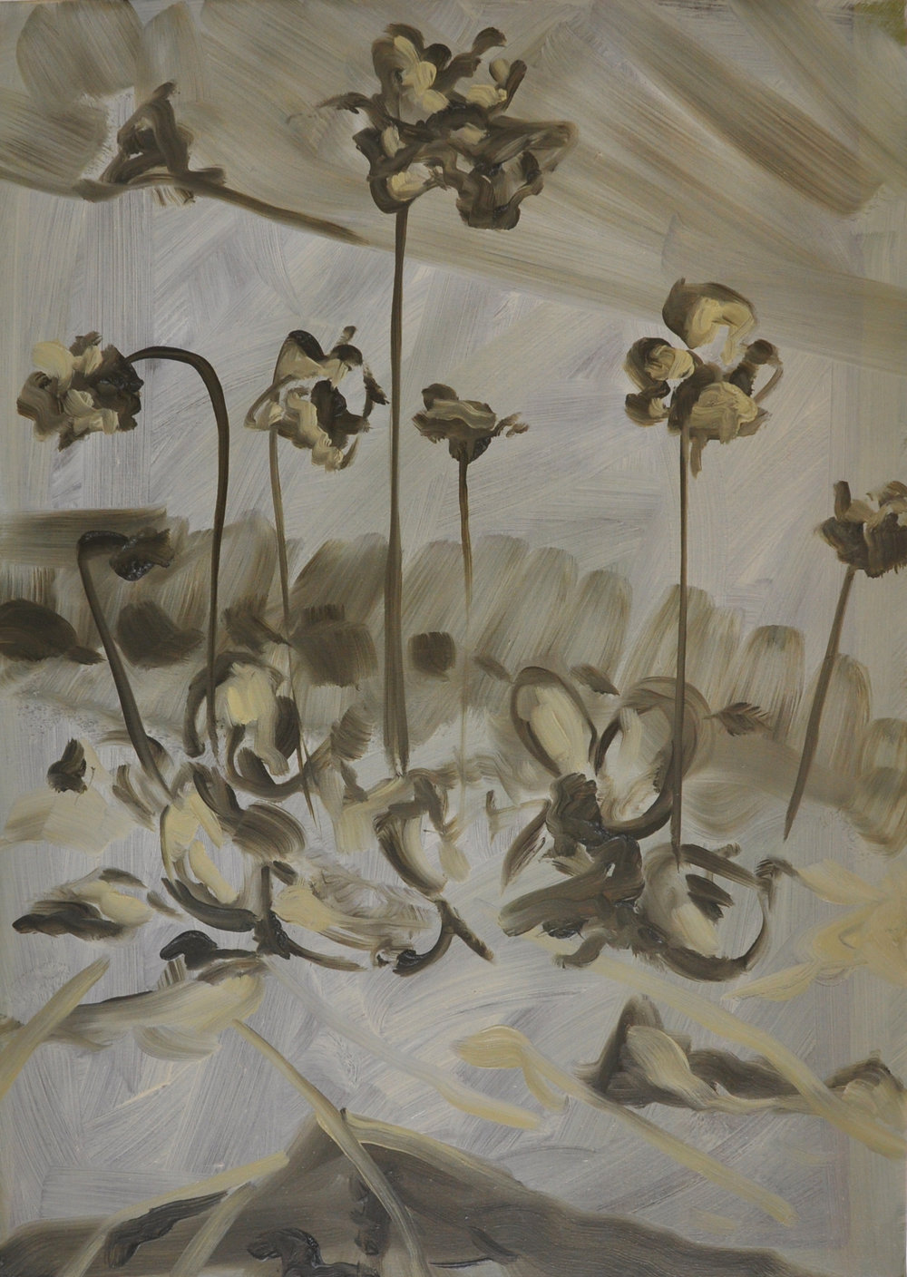 Irish Butterwort, 2011, Oil on cotton, 70 x 50 cm
