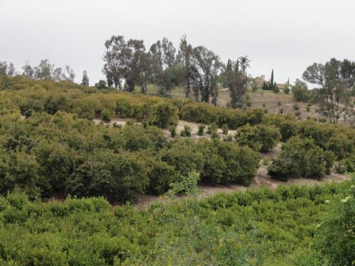 Santa Barbara County
