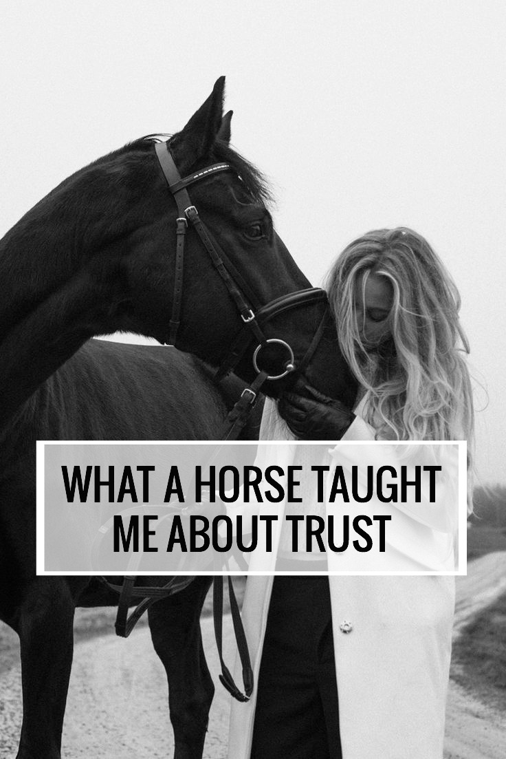 What Horses Taught Me About Trust