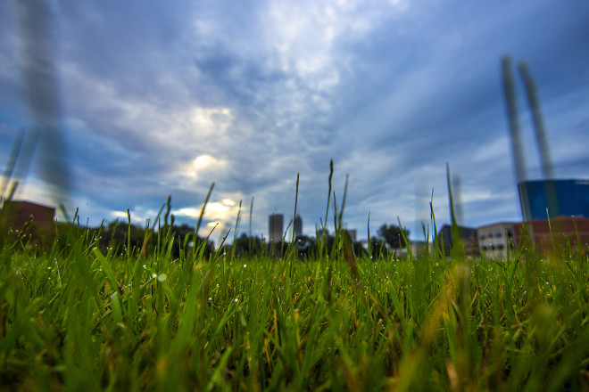 Skyline Through Grass