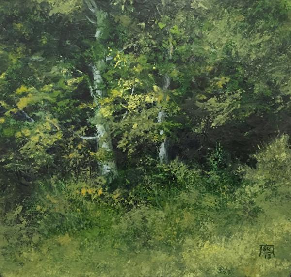 Shawn Krueger woods-edge-summer.jpg