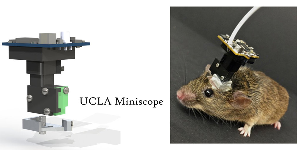 UCLA Miniscope Edited.jpg