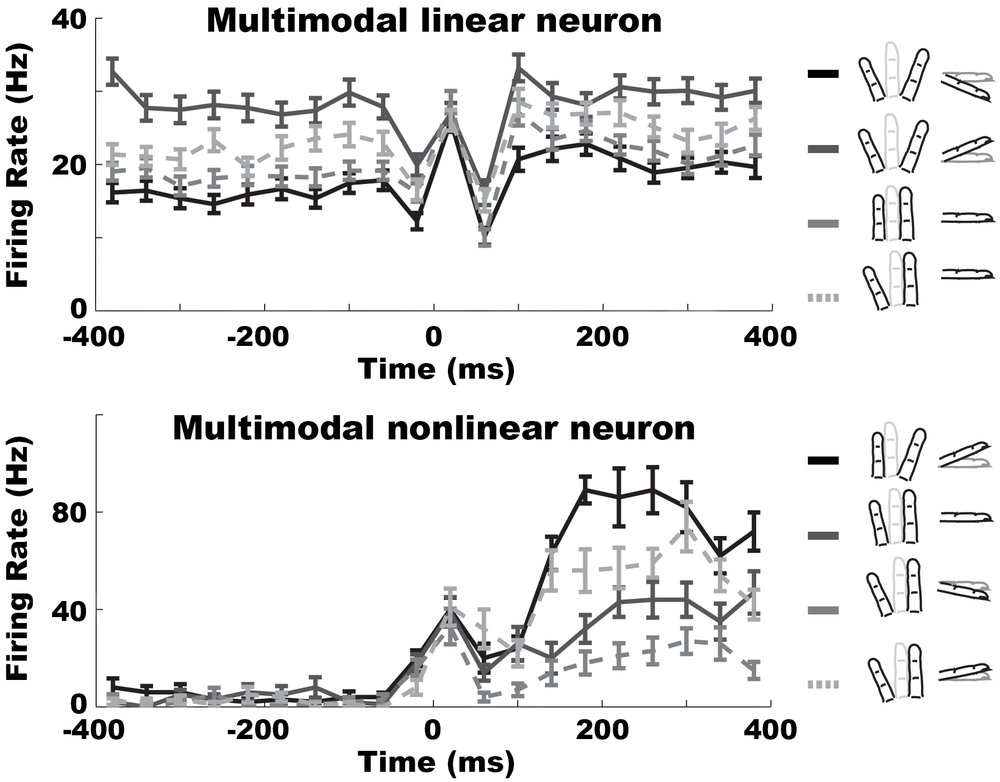 multimodal_neurons.jpeg