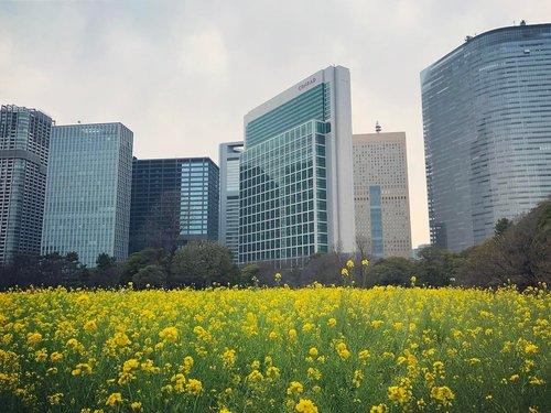 hamarikyu+garden+flowers+tokyo+japan.jpg