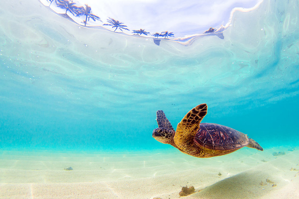Hawaiʻi Cannabis - Hawaiʻi Medical Marijuana for Residents & Visitors