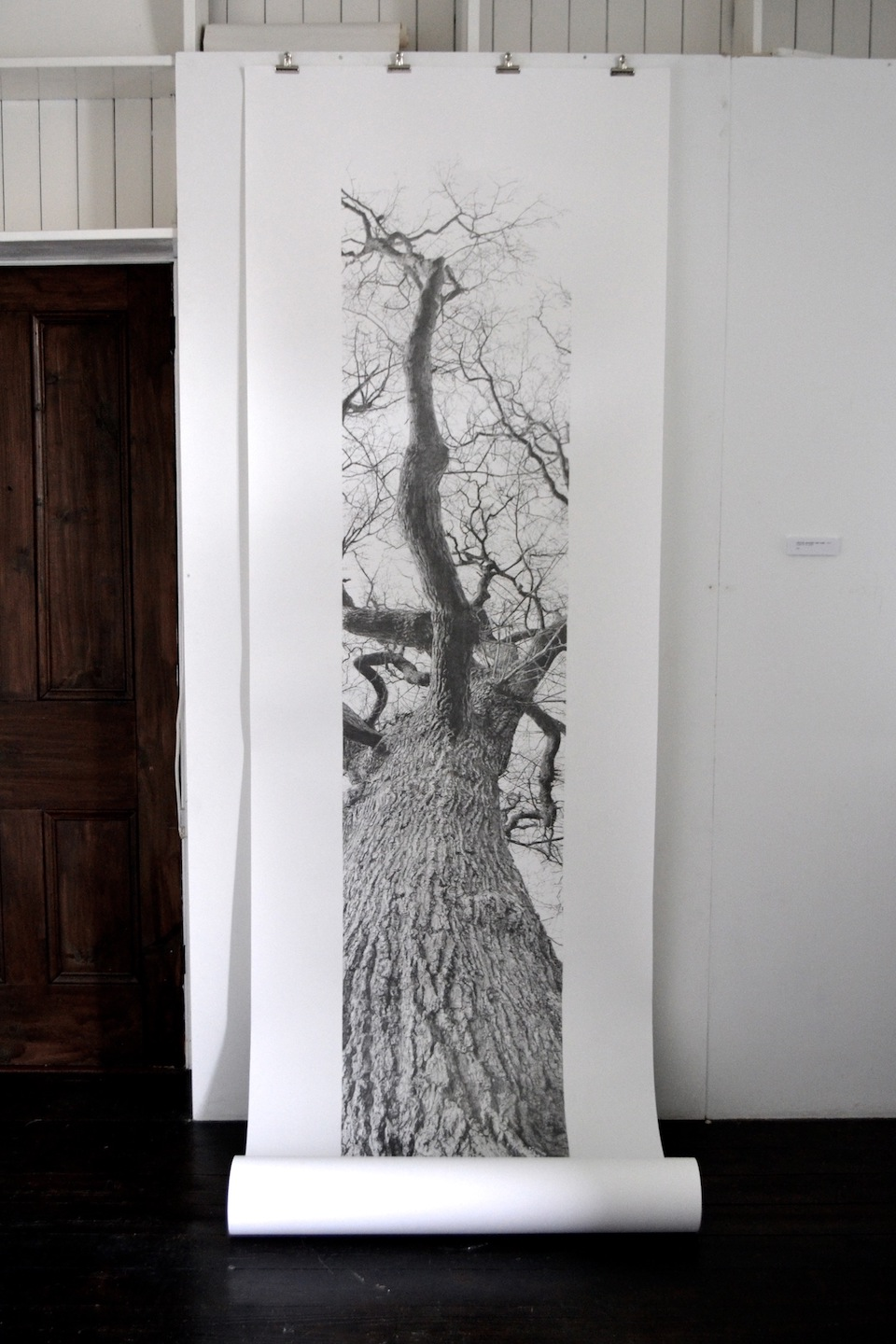 Vertical Panorama: Oak Tree