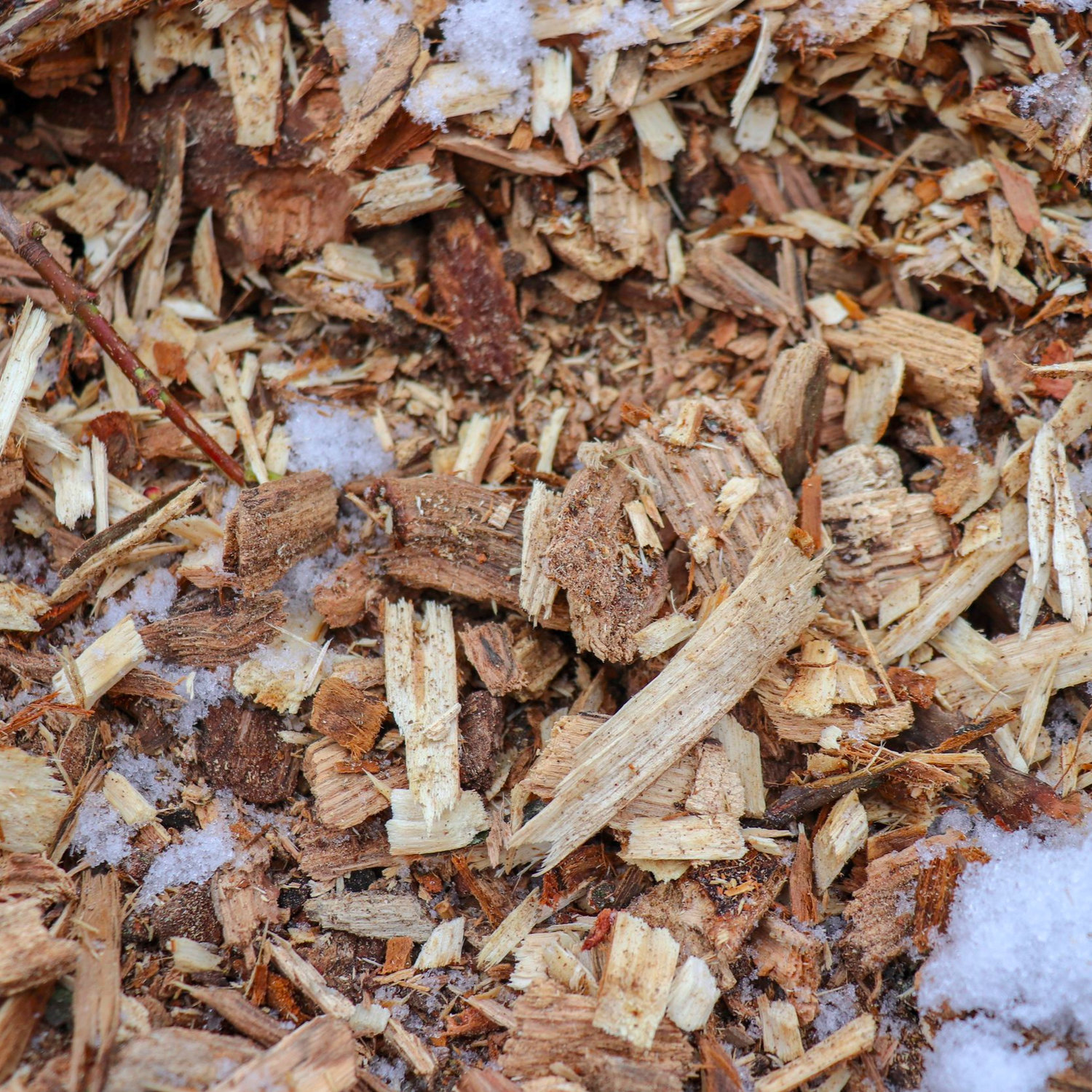 MULCH//Are Wood Chips Harmful to Gardens?