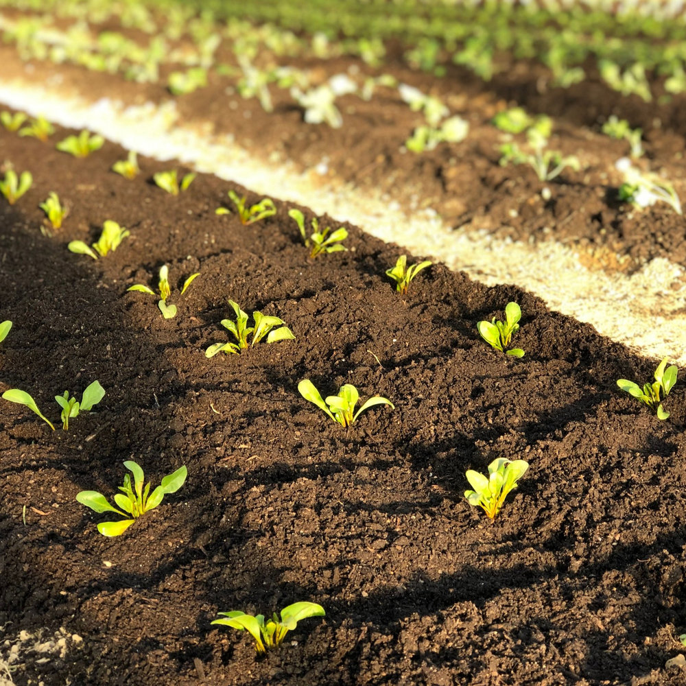 Mulch Pros Cons Of The Deep Compost Mulch System No Till Growers