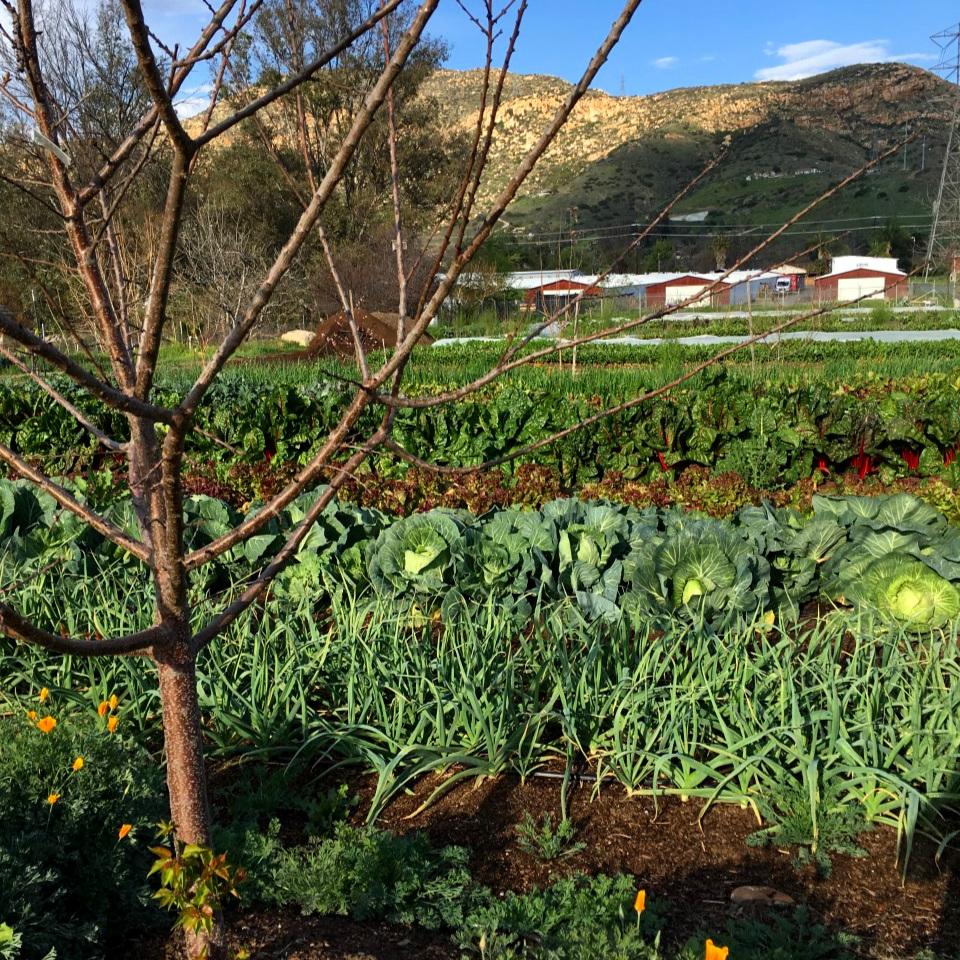 Farmspread.jpg
