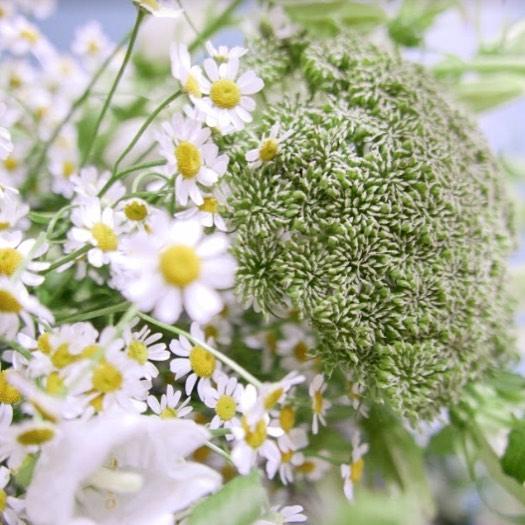 • 18h20, printemps - fleurs des champs.  #ammifleurs