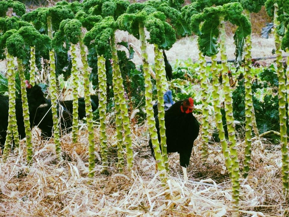 chicken in veg 4.jpg