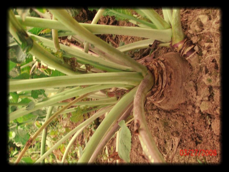 root veg.jpg