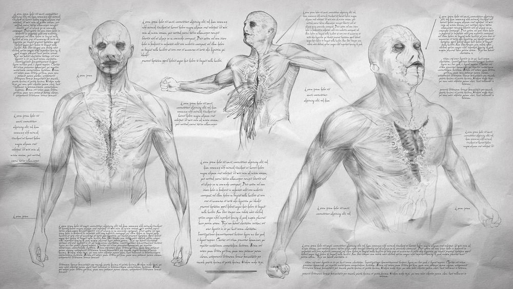 Anatomical drawings of a species of creatures from the shows universe.