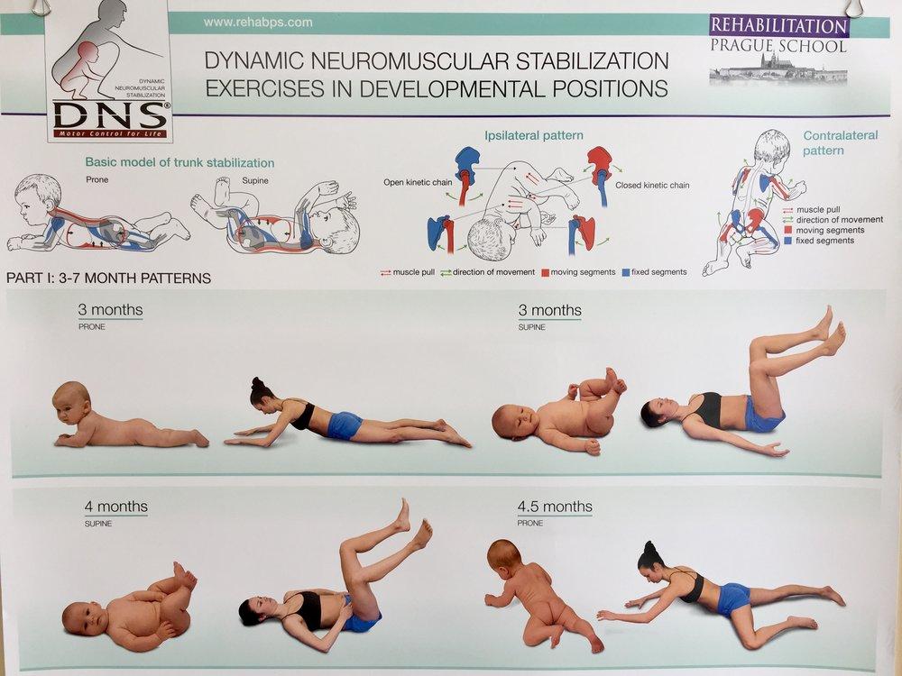 Image courtesy of  https://www.rehabps.com/REHABILITATION/Posters.html