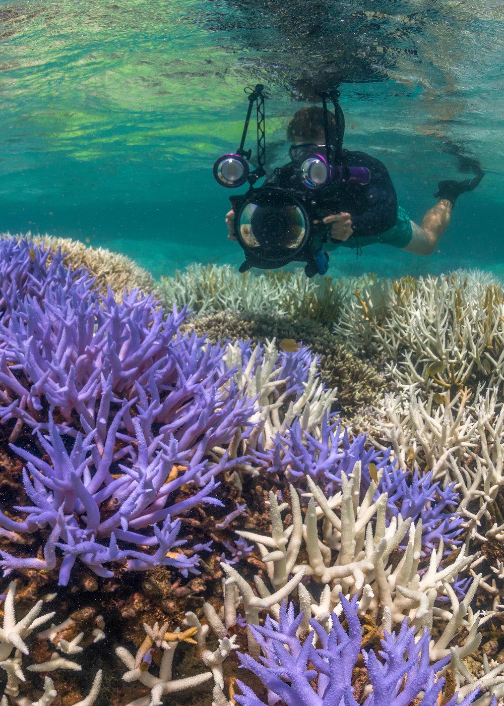 20 Coral bleaching in New Caledonia (1)-2.jpg