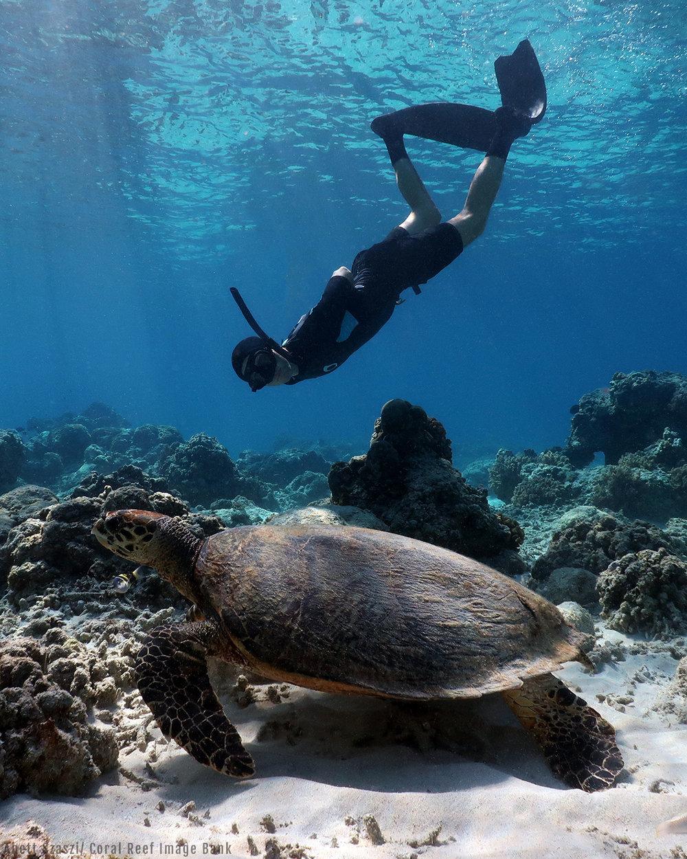 anett-turtle.jpg