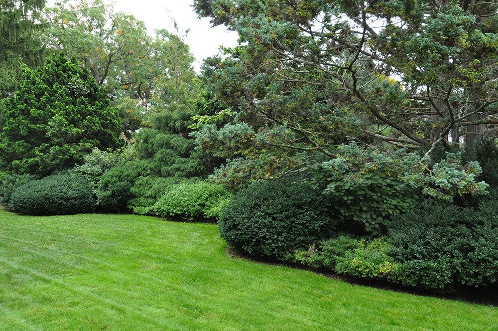 tapestry-hedge.jpg