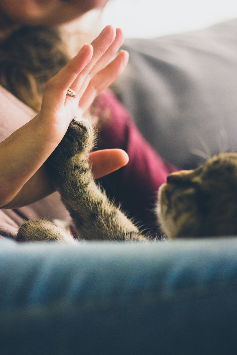 A high five for all you awesome cat owners!
