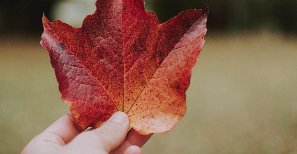 autumn-blur-canada-1563524.jpg