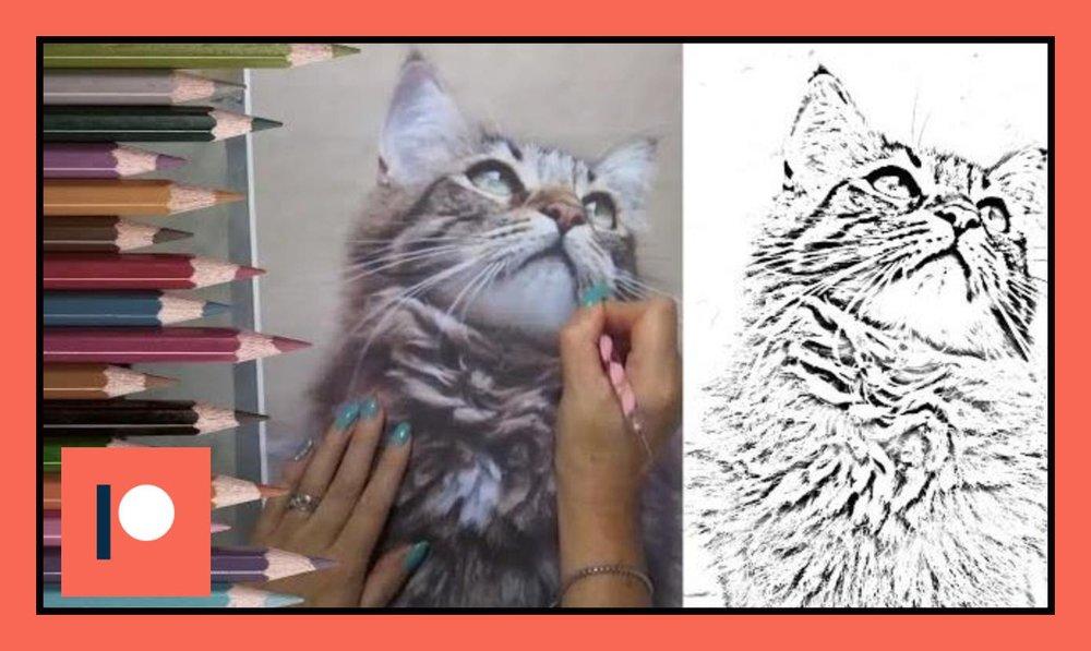 Fluffy cat One - Duration 15 mins.jpg