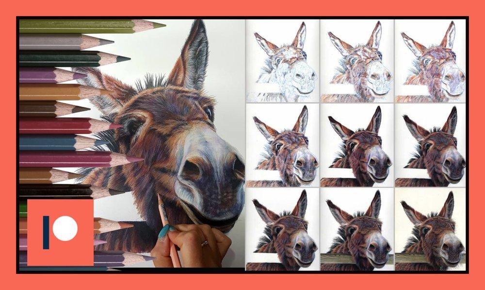 Donkey one - duration 1 hr.jpg