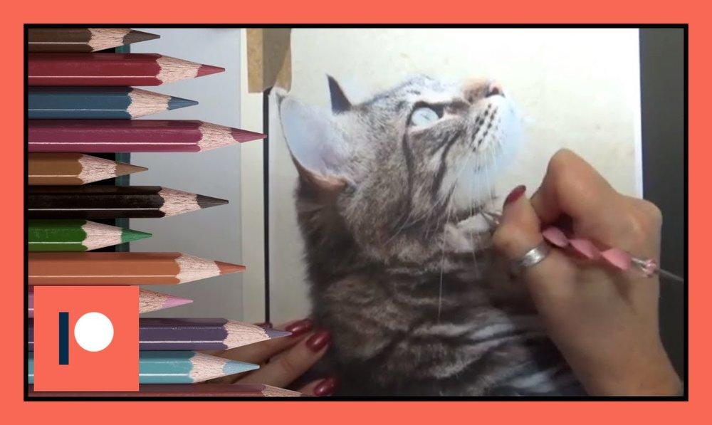 cat part 1.jpg