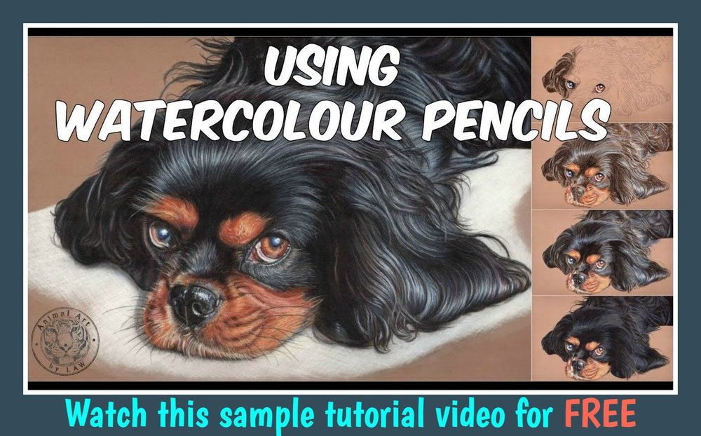 How to create a watercolour pencil underpainting.jpg