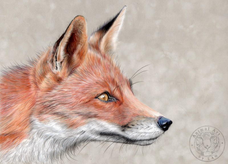 fox-fin-scan-cp.jpg