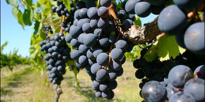 Drive_through_Napiers_wine_growing_region_with_Hawkes_Bay_Scenic_Tours.jpg