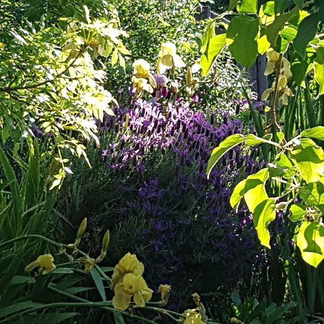 Flowers - garden.jpg