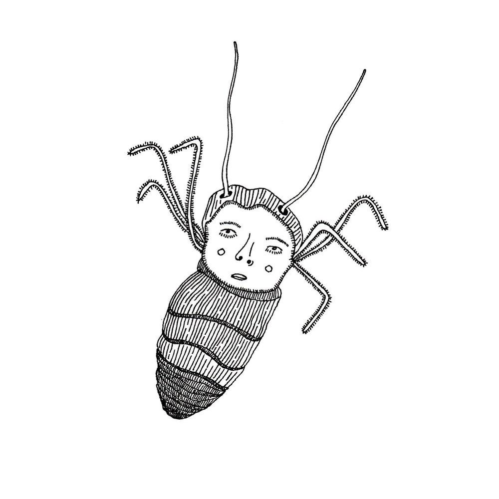 cockroach_1.jpg