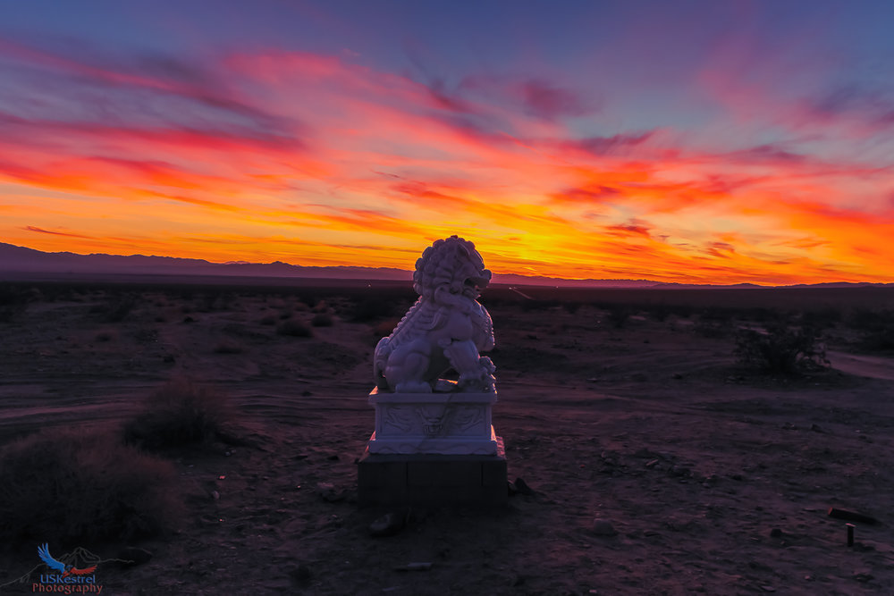 A Lion, the desert and an amazing sunset