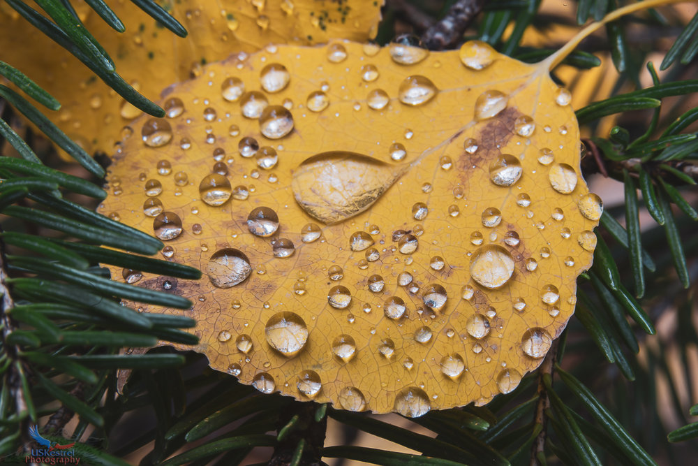 Nature's Delicate Balance